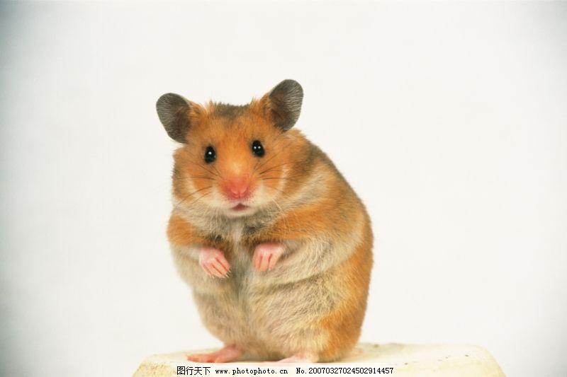 可爱小动物0087