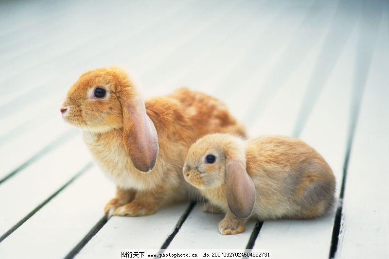 可爱小动物0047