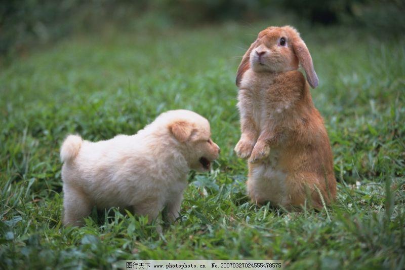 可爱小动物0006_家禽家畜