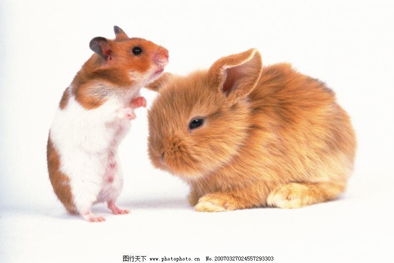 饮食水果 可爱小动物