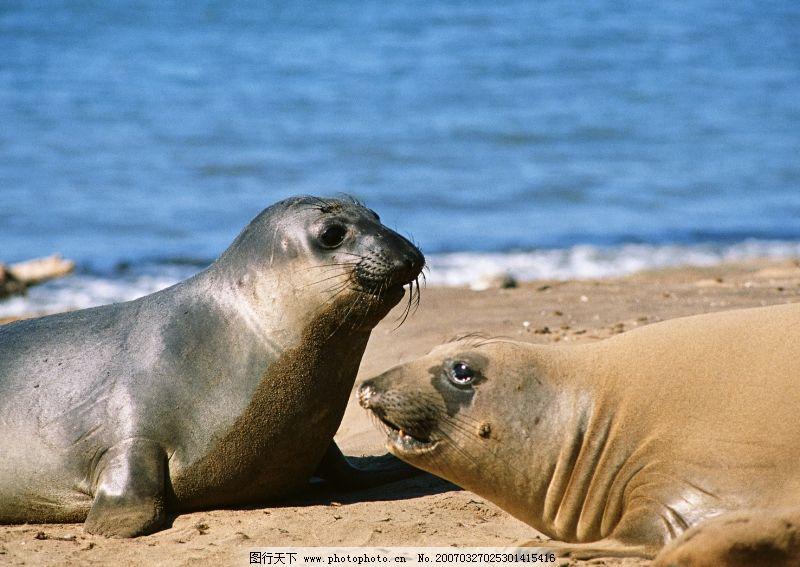 海中动物0159_海洋生物