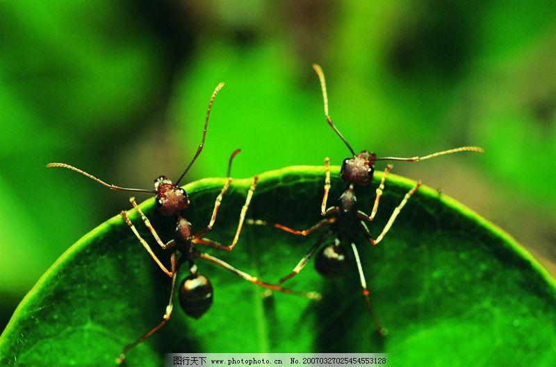 爬行动物,昆虫0180