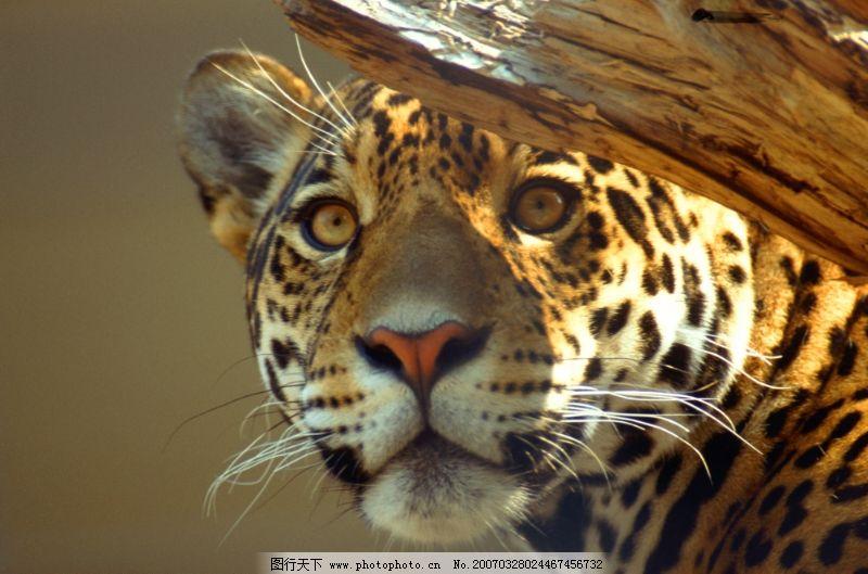 动物世界0049