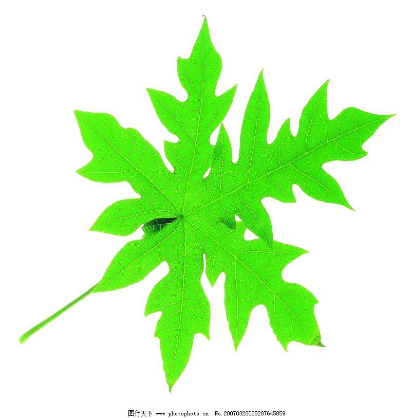 绿叶0002 自然风景