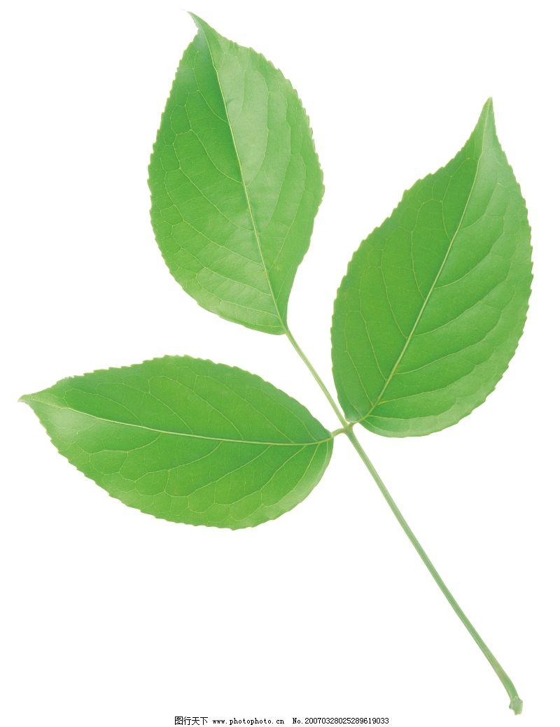 绿叶0050 自然风景