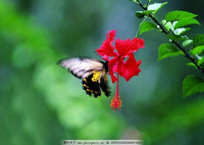 爬行动物,昆虫0358